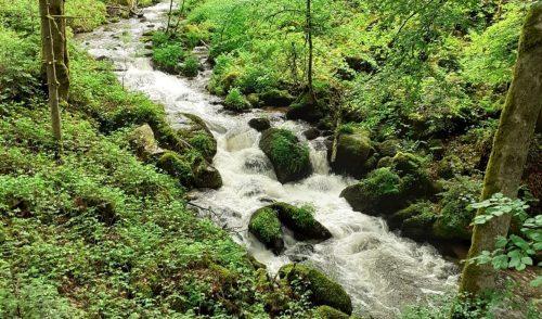 Artikelbild zu Artikel 2000 Höhenmeter auf dem Schwarzwälder Albsteig